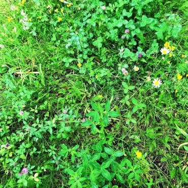 Wilde bloemenmat divers