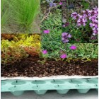 Sedum plus plant pakket