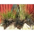 Turfbaaltjes met grassen