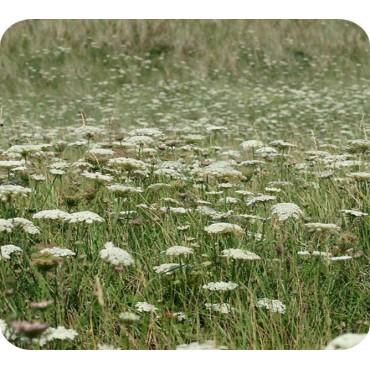 Wilde bloemenmat Sparkling white