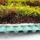 Sedumpakket voor plat dak